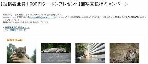 amazon 猫写真の投稿で1,000円OFFクーポンがもらえる